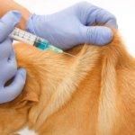 Vacinação antirrábica em Água Longa decorre a 13 de Outubro